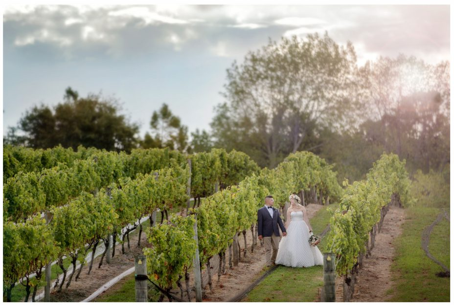 Bride and groom walk in among the vines in the late evening golden sunshine.