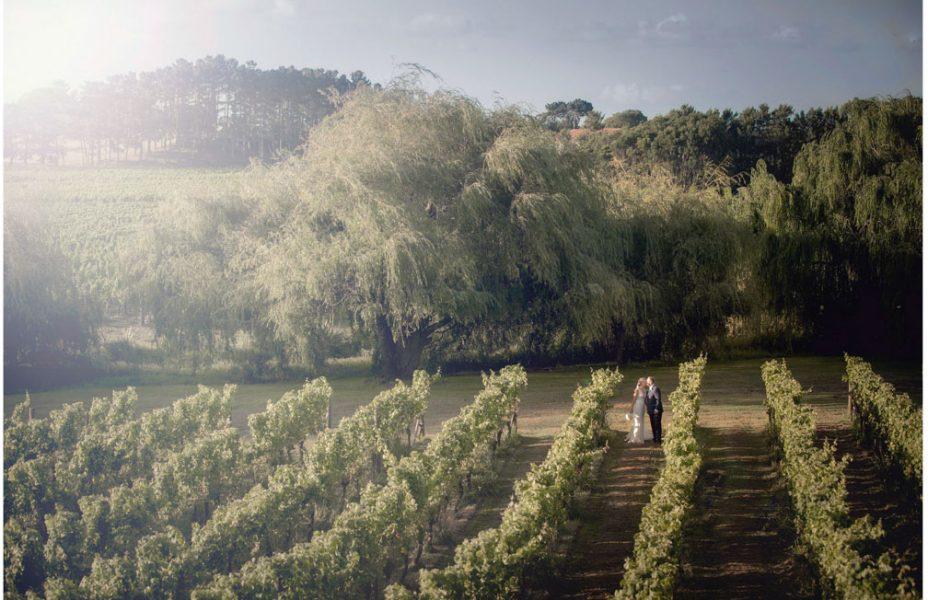 Wedding photo at Villa Maria Auckland by Auckland wedding photographer Chris Loufte