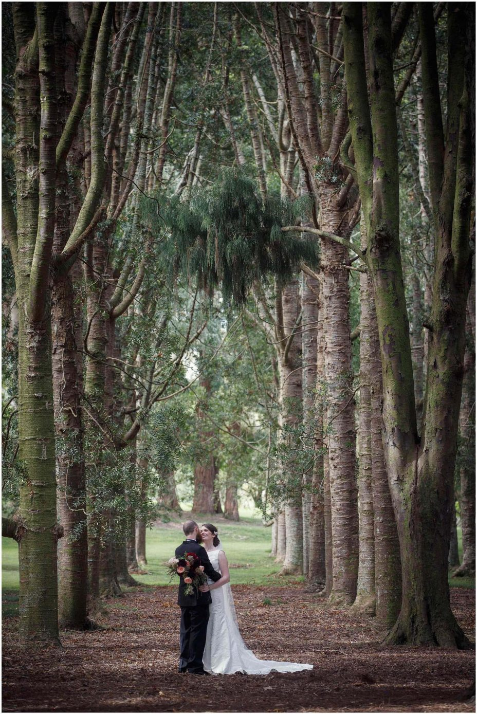 Bride and groom kiss under a canopy of Kauri trees in Cornwall Park Auckland.