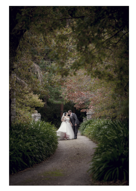 Bride and groom look tiny against huge trees at Gracehill Vineyard Estate.