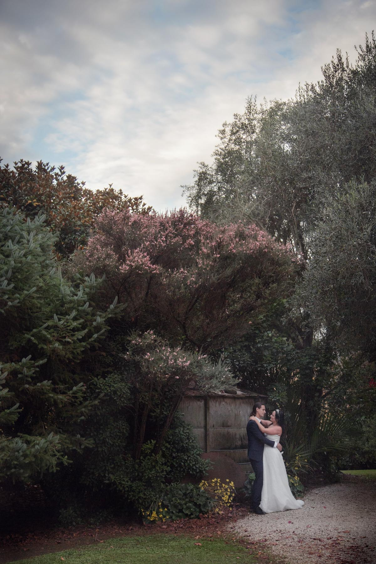 Bride wearing traditional white wedding dress and her new husband wearing a black suit embrace infront of a flowering Manuka tree in the gardens for their wedding photos at Kumeu Valley Estate