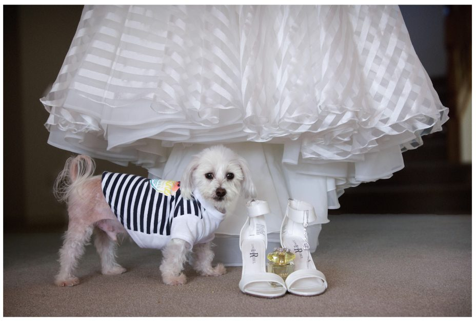 Little dog with bride's wedding dress, wedding shoes , perfume and jewellery.